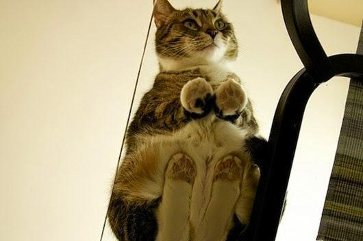 вид-снизу-коты-на-стеклянных-столах-9
