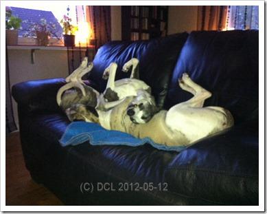 upsidedogs