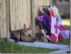 Photo: Cirillo Dogs by Huffington Post Canada