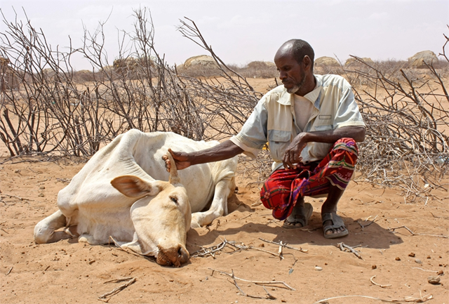 Abdille Muhamed with his dead cow in Garse Koftu village, 120 km from Wajir in northeastern Kenya, 28 July 2011. &copy; Jaspreet Kindra / IRIN