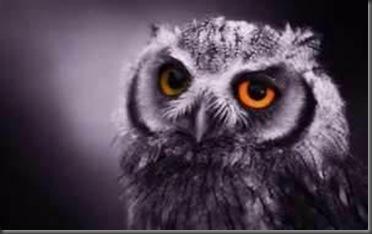 2501_Owl