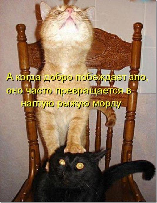 kotomatrix_0051