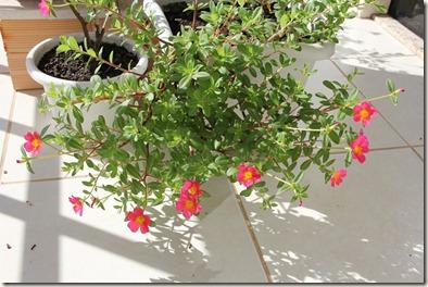 Jardim 25-12-2011 004