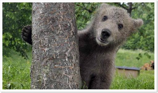 abrazo de oso televisivo