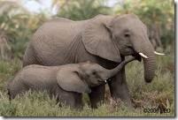 elephant two