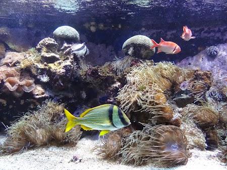 30. Pesti exotici in Muzeul Oceanografic Monaco.JPG