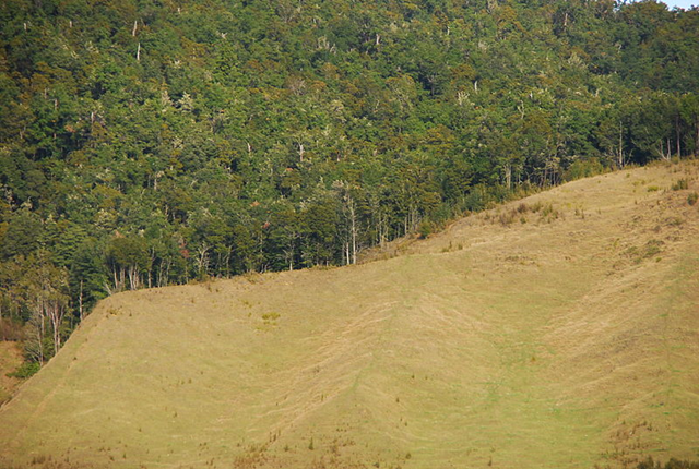 Deforestation in Newzealand (South Island: Tasman, Westcoast), 3 May 2011. Photo: Martin Wegmann