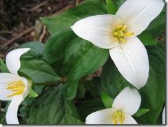 planting-flowers-1204-9