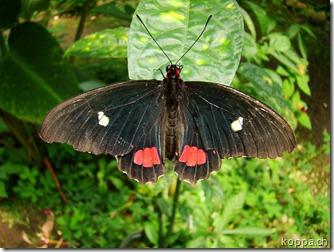 110528 X Schmetterlingsfarm (3)