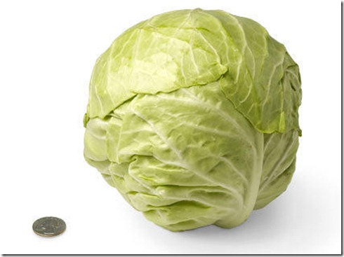 30-green-cabbage[1]