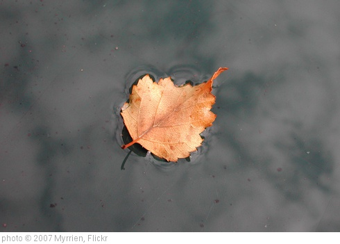 'Autumn Leaf' photo (c) 2007, Myrrien - license: http://creativecommons.org/licenses/by-nd/2.0/