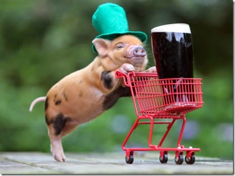 animals-st-paddys-day-001