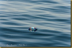 Mylar Ballon Floating in Ocean