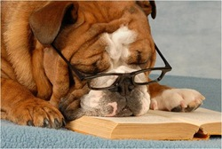 reading bored dog