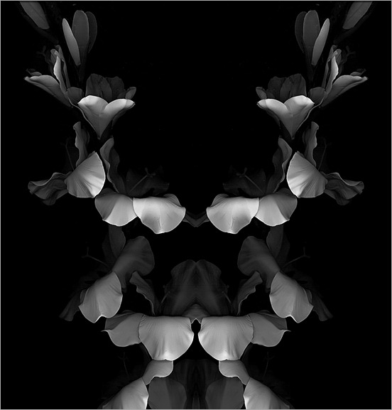 Rorschach Bouquet - flowers 002