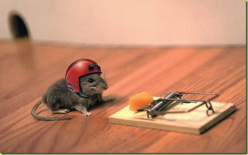 animals-helmets-mouse-trap-mice