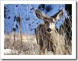 SKArunner_Deer