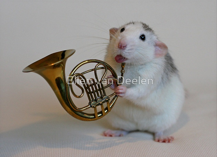 rat-musicians-010