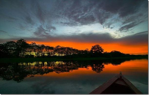 beautiful-amazon-rain-forest-14