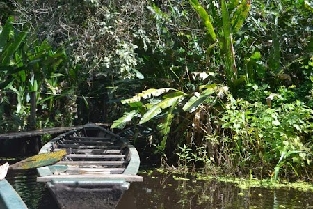 Jungla amazoniana: Barca pe Amazon