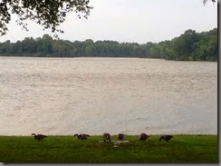 07-27-14 - geese_resize