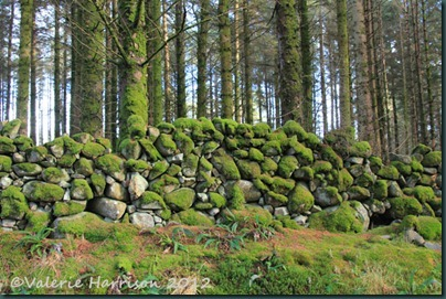 28-mossy-wall
