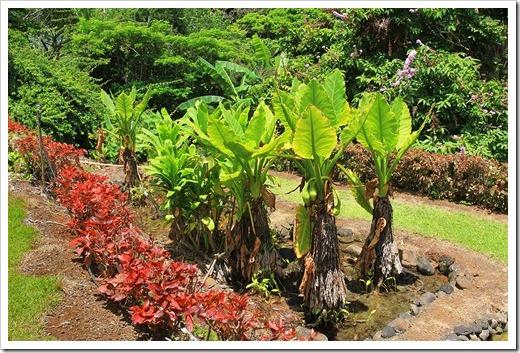 130713_TropicalGardensOfMaui_055