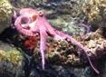 Manche Atlantique flaque d'eau pieuvre