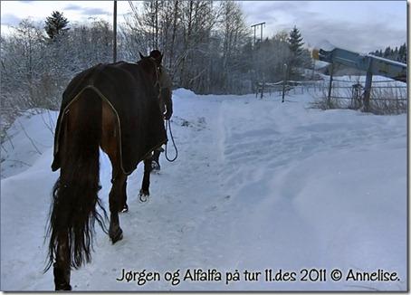 alfalfa-tur-11des_07