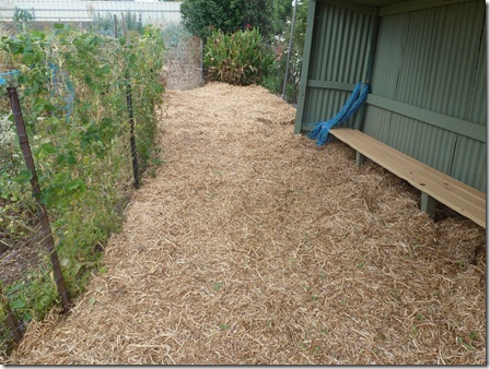 Mulched paths capture winter rainfall, suppress weeds and give chickens a place to roam and scratch for a free feed of earwigs that love life in the cool moist underside of mulched areas.
