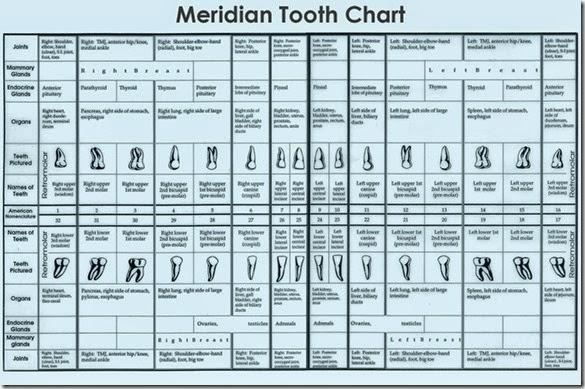 meridiantoothchart