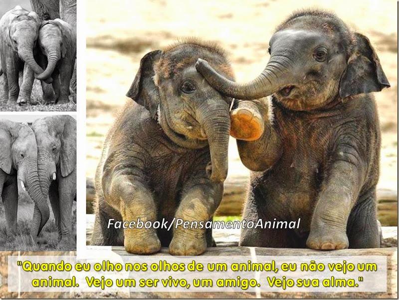 alma-animais