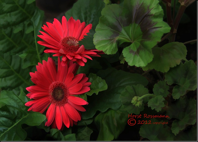 My Red Daisies Painting copy