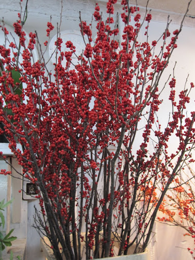 A closer look at the Ilex -- the red will be beautiful to mix in to make a Christmas arrangement next month!