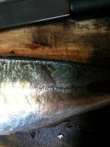 魚のウロコ