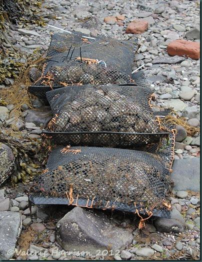 10-Loch-Ryan-Oysters