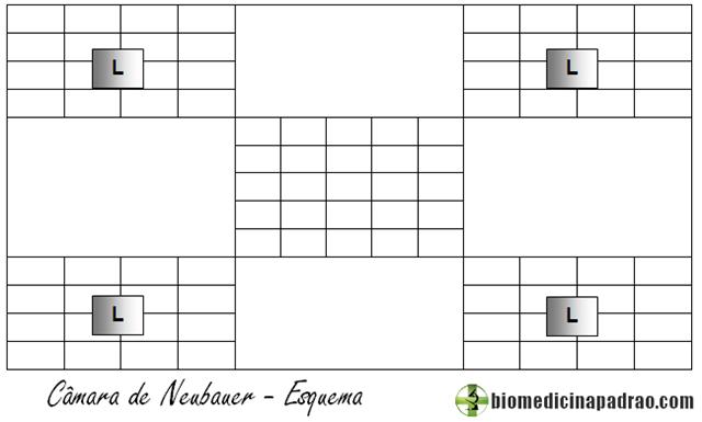 Câmara de Neubauer
