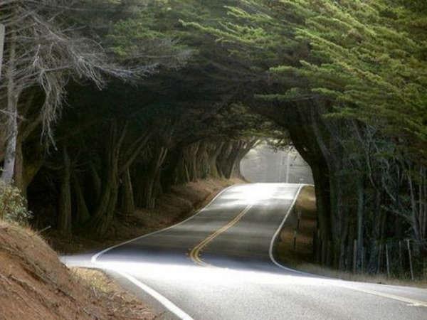 Você pode encontrar a beleza nos lugares mais estranhos 18