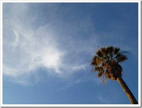 111231_tree_silhouette_7