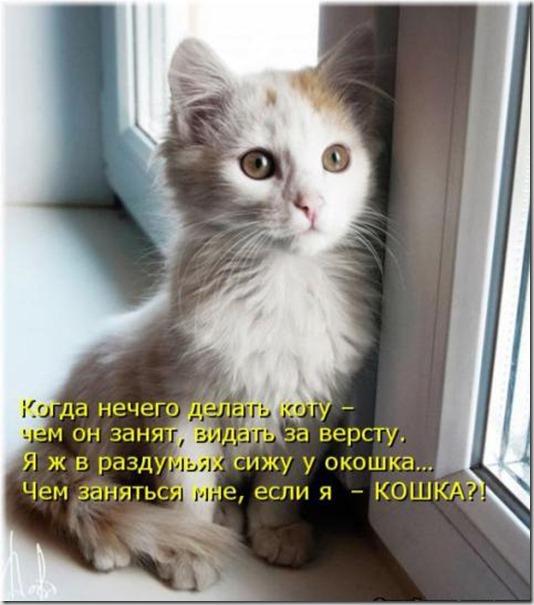 d973c3a28d488cf47510f657c3d_prev