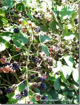 Many Waters Abundance of Blackberries Matthew 6 26