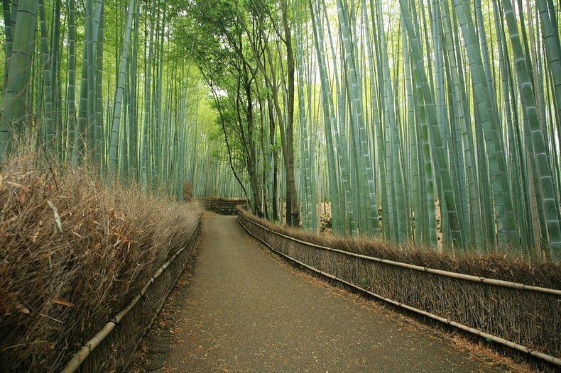sagano-bamboo-forest-8-resize