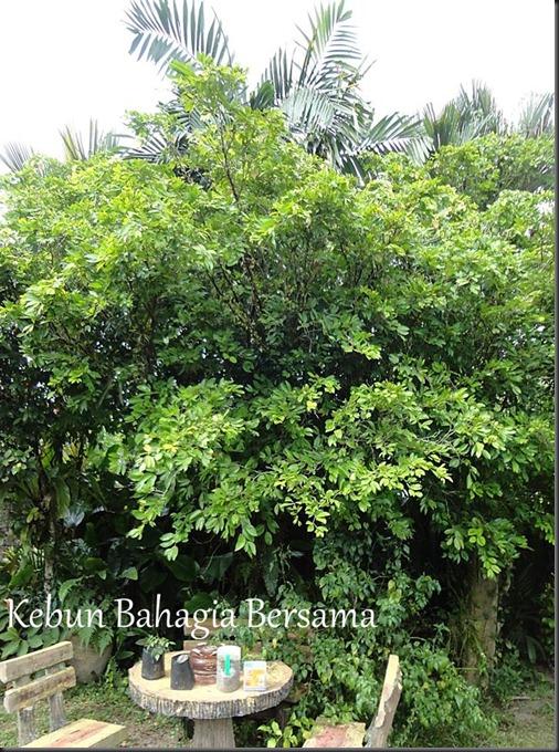 Nam Nam Tree
