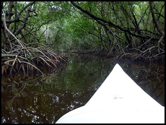 04b - Paddling through the Mangrove Tunnel