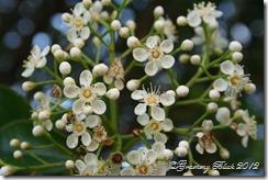 7 Green Spring