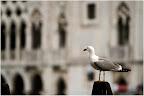 In Venedig zu Hause