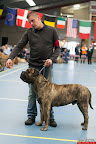 20130511-BMCN-Bullmastiff-Championship-Clubmatch-2259.jpg