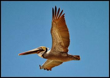 01c - Pelican overhead