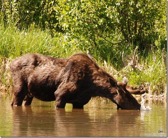 06-08-13 A Moose Wilson Road (75)a