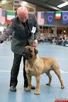 20130511-BMCN-Bullmastiff-Championship-Clubmatch-2228.jpg